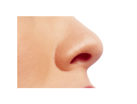 small female nose transparent png stickpng #36834