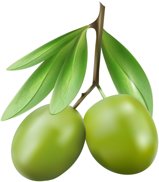green olives png clip art image gallery yopriceville high quality images and transparent png #30108