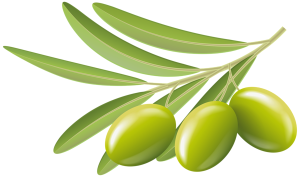 green olives transparent clip art image gallery yopriceville high quality images and #30095