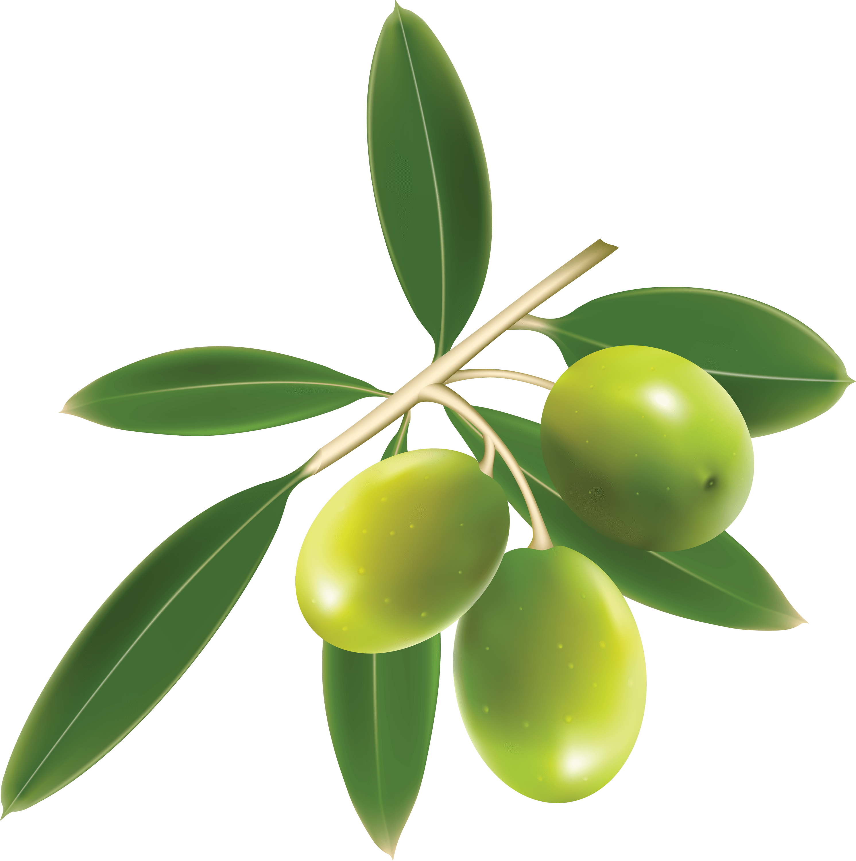 green olives trio transparent png stickpng #30050