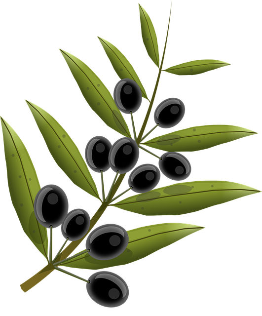 olives fruits olive tree vector graphic pixabay #30118