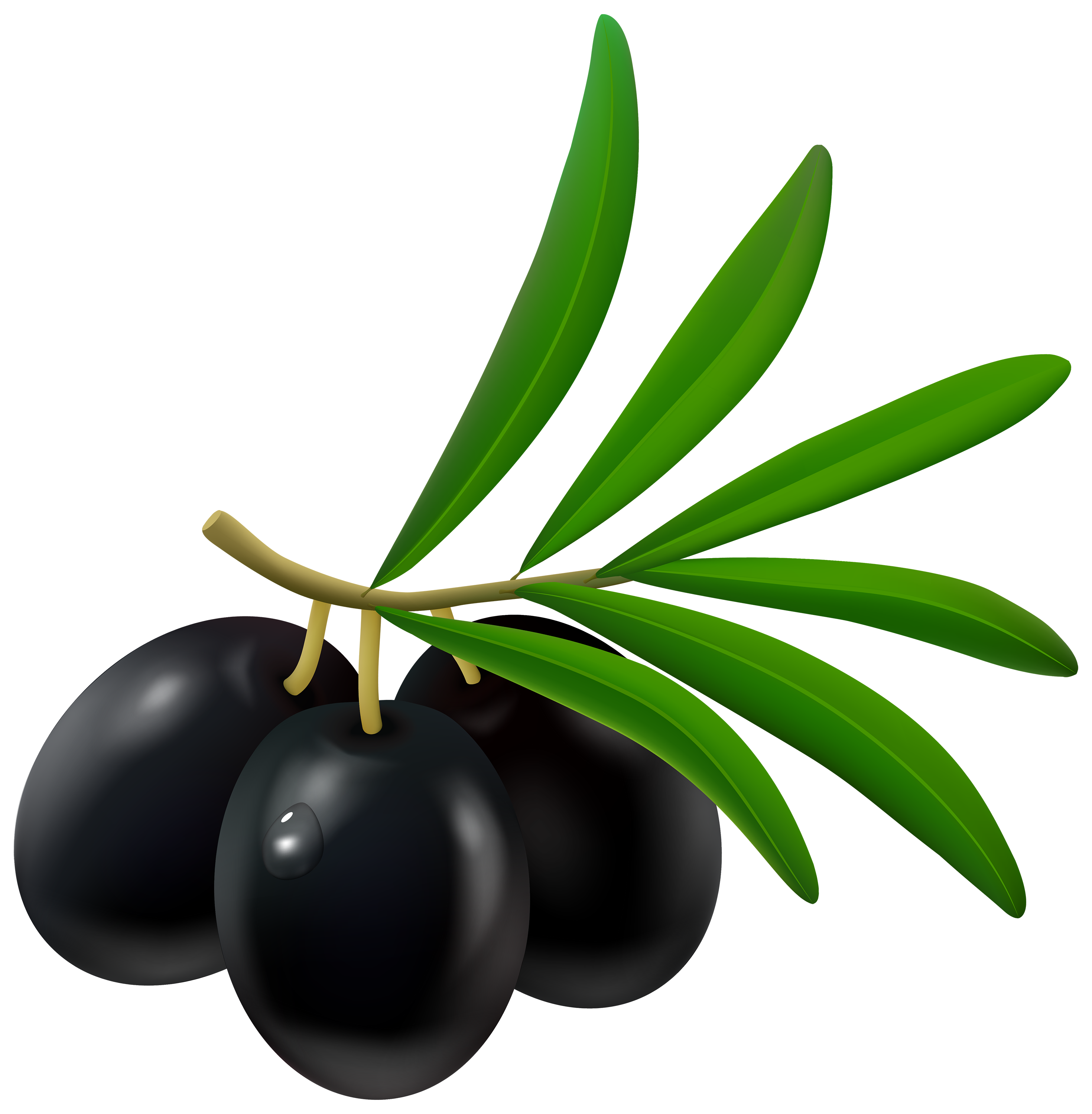 olives, olive clipart clipground #30093