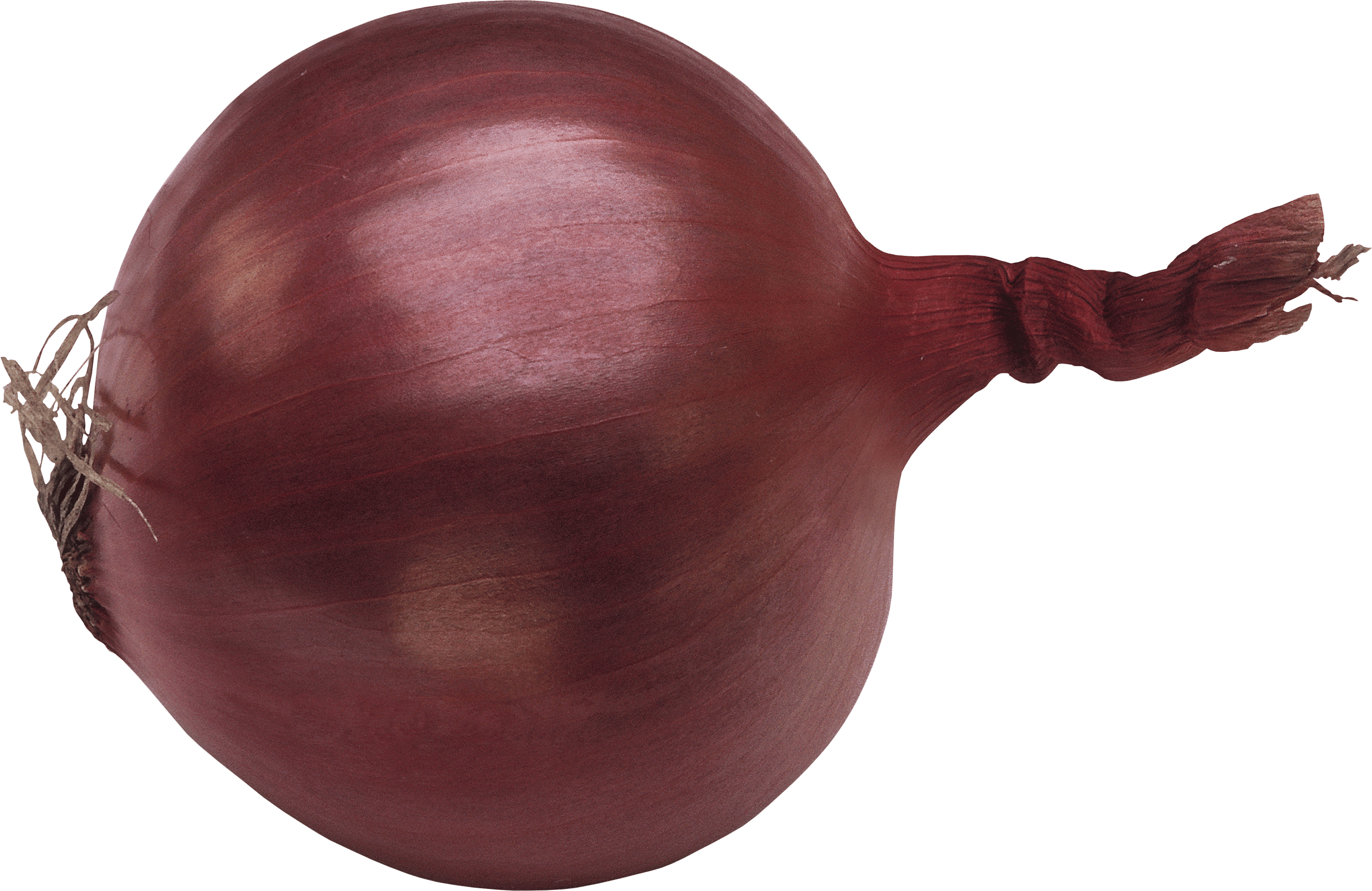 download onion png image png image pngimg #22177