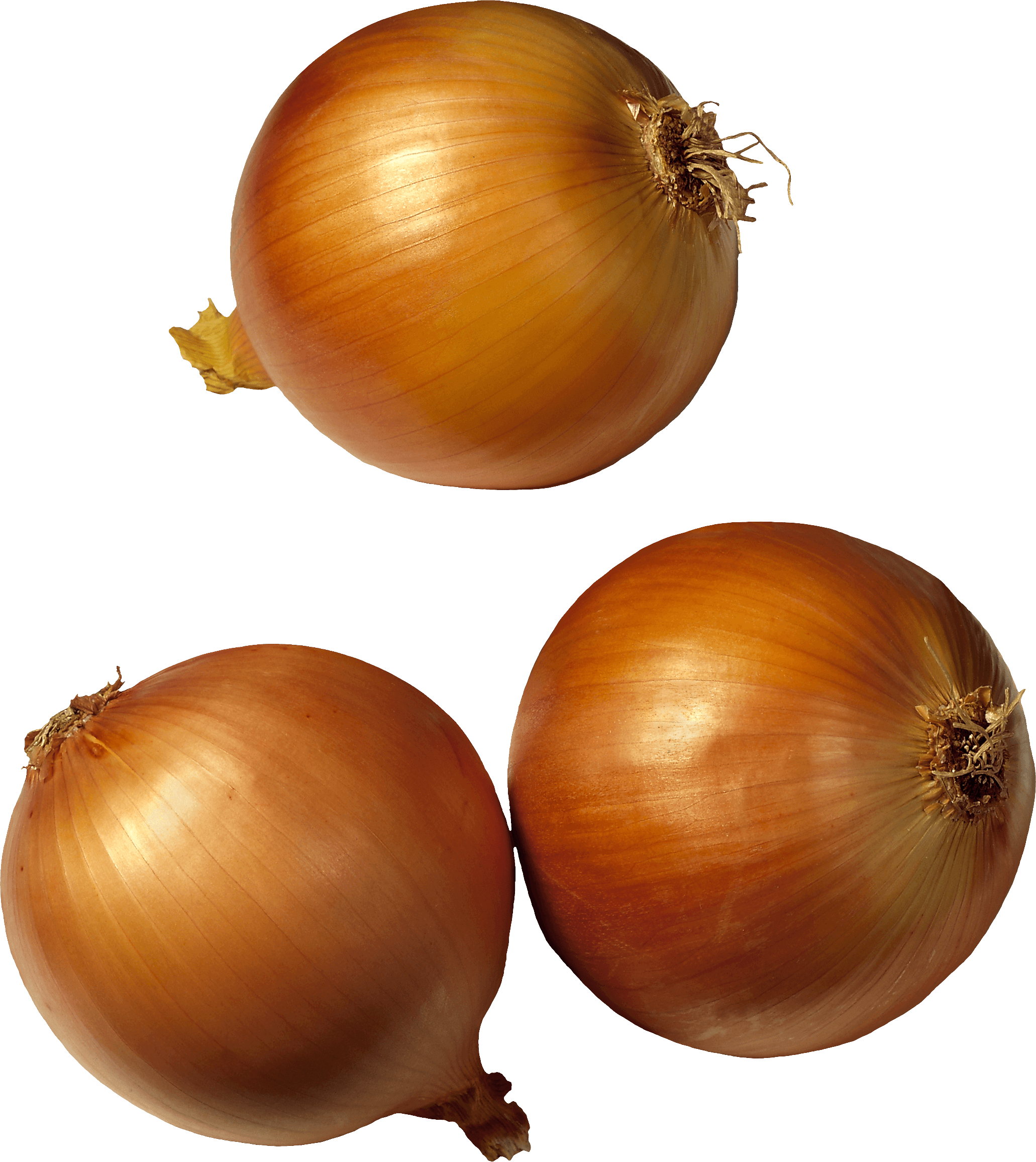 download onion png image png image pngimg #22198