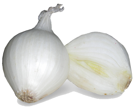 download white onion png image transparent png #22166