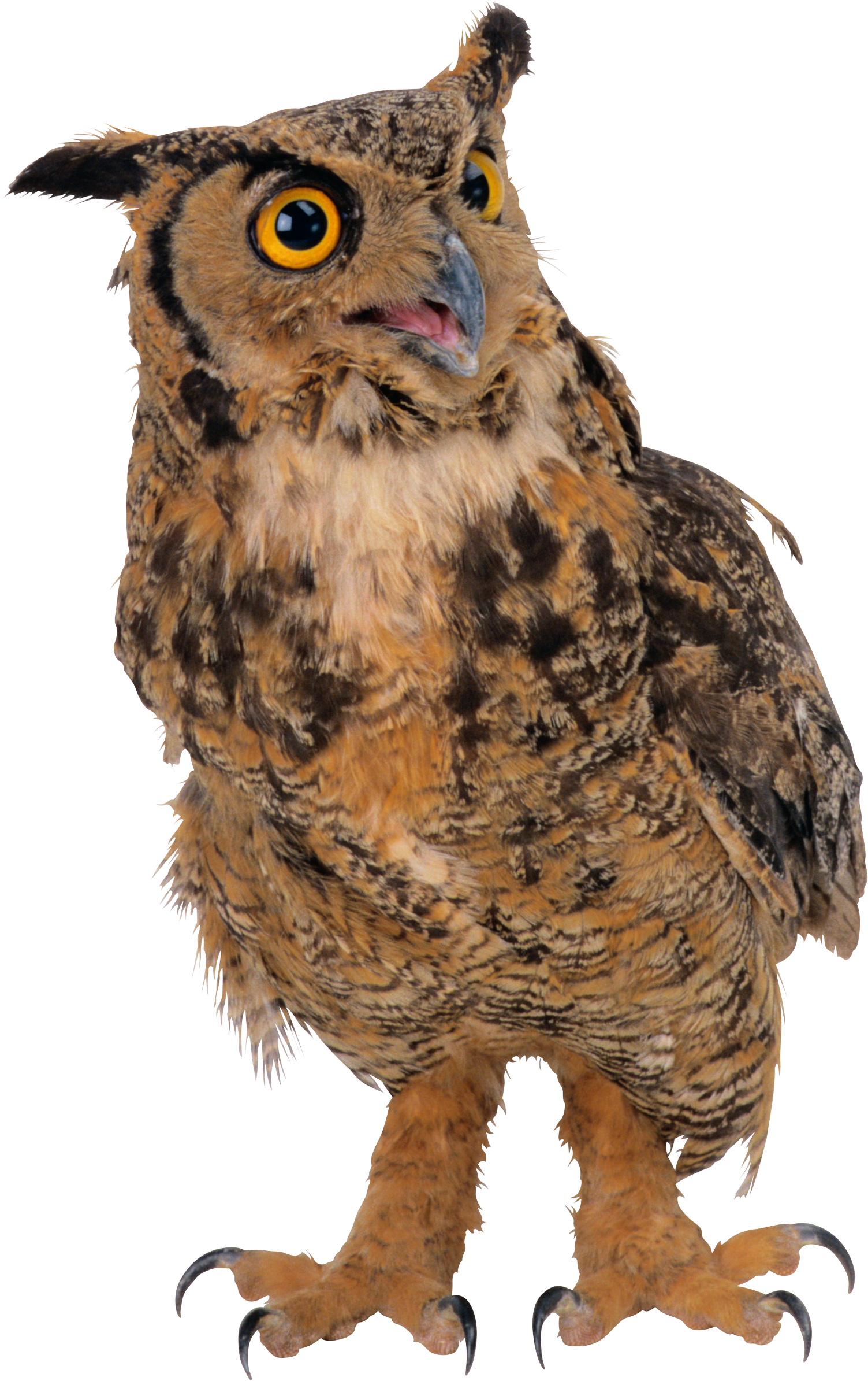 owl png images for download crazypngm crazy png images download #28969
