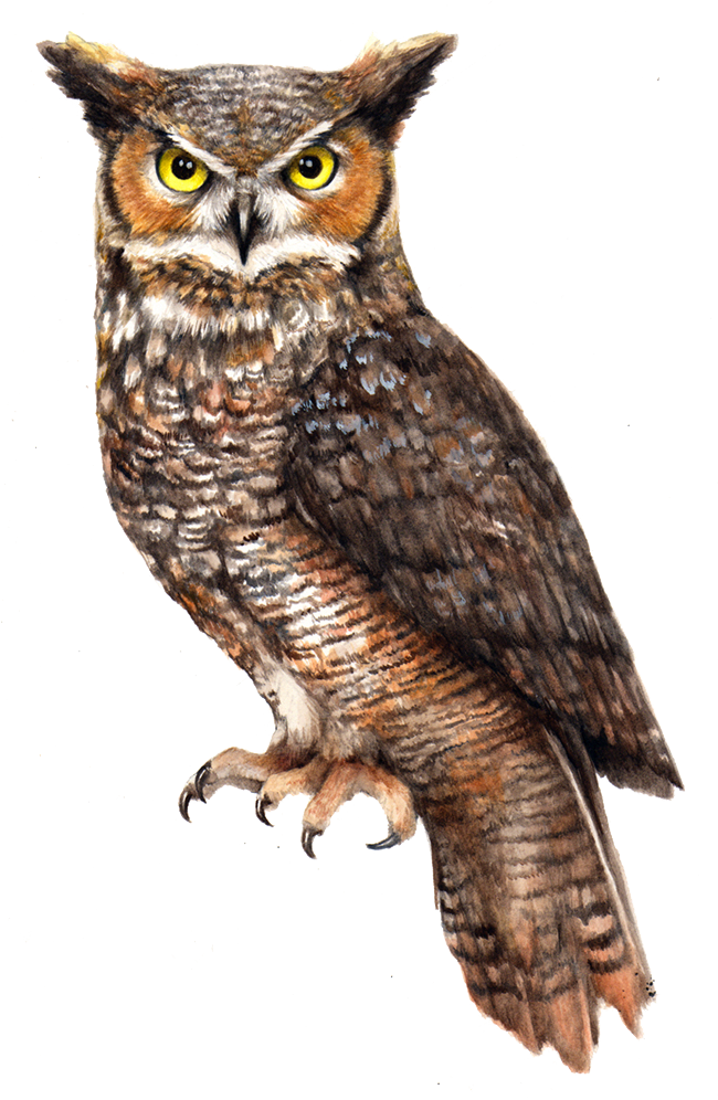 owl png owl transparent images pngio #28966