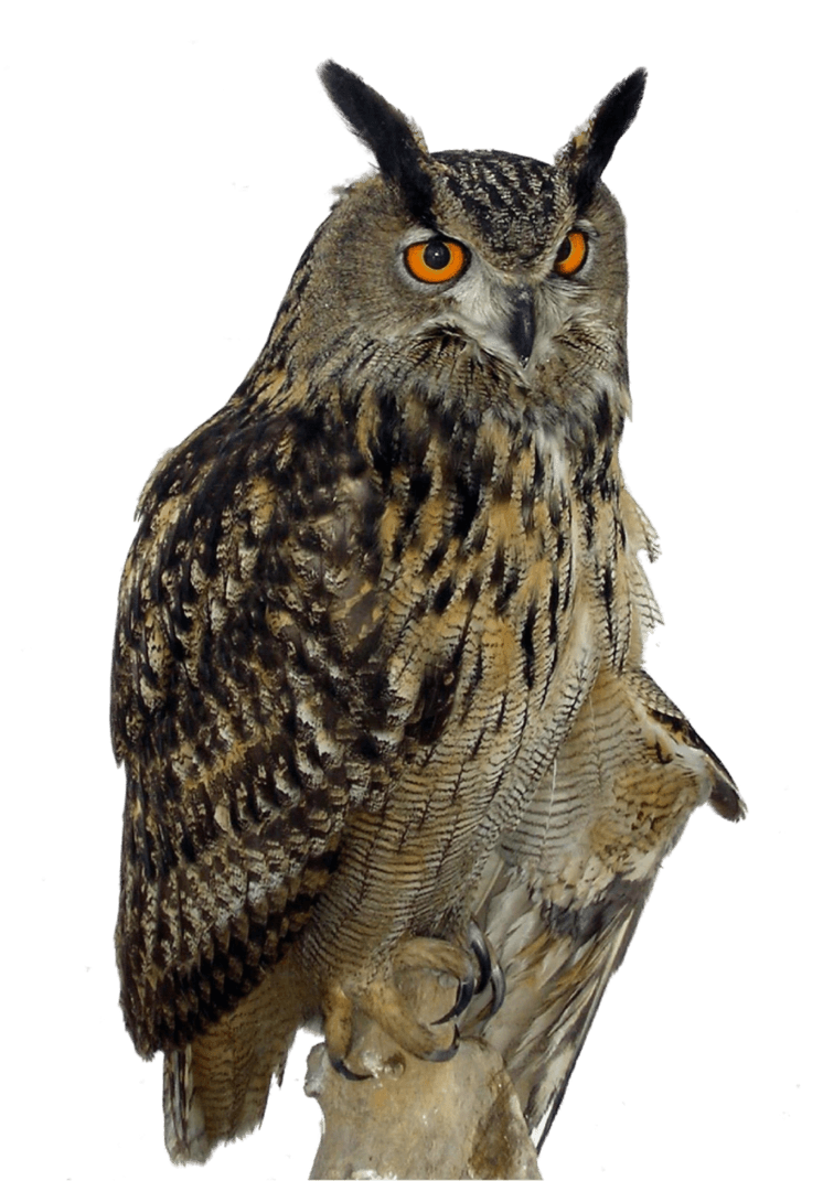 owl right transparent png stickpng #28959