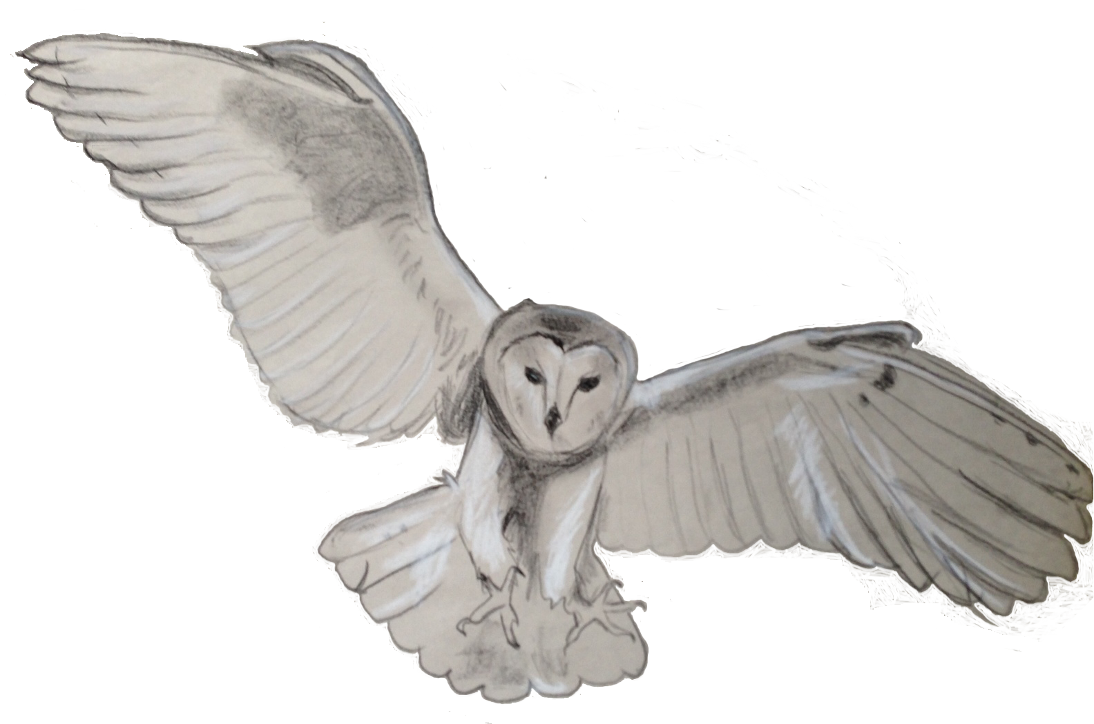 owl, the benefits barn owls #28970