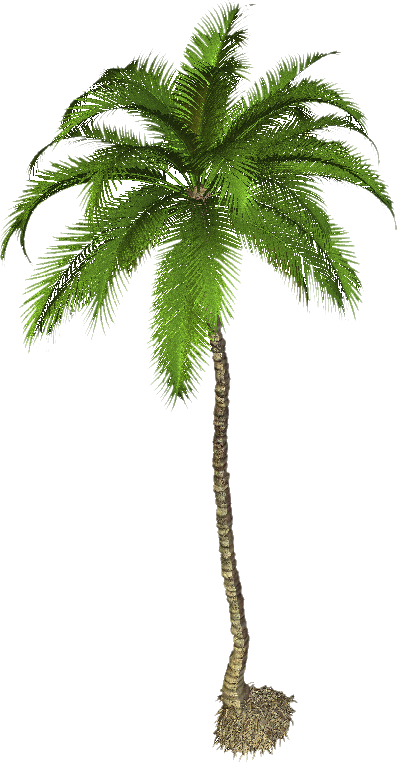 download palm tree png pic png image pngimg #11004
