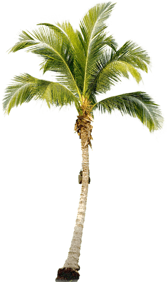download tropical palm tree png png image pngimg #11027