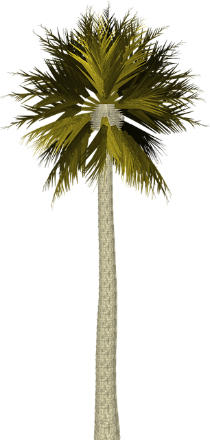 illustration palm tree palm tree tropical #11043