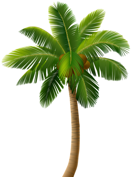 palm tree png clip art image gallery yopriceville high #11051