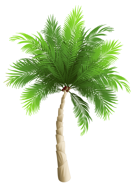 palm tree png clipart image gallery yopriceville high #11011
