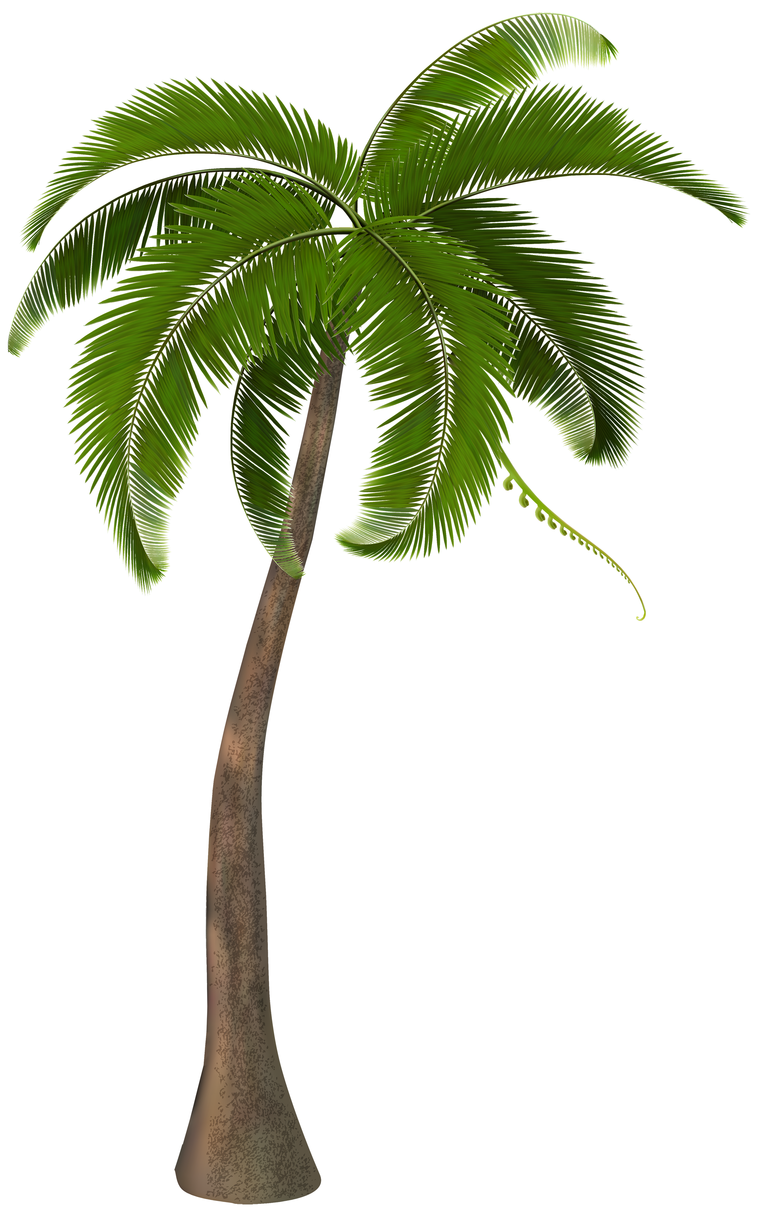 palm tree png transparent palm tree images pluspng #11010