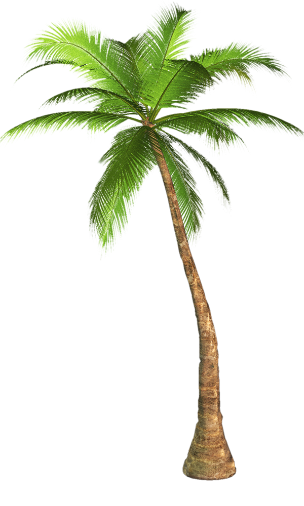 palm tree transparent background image #10991