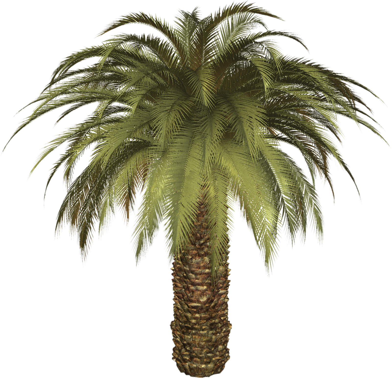 palm tree transparent png pictures icons and png #11047