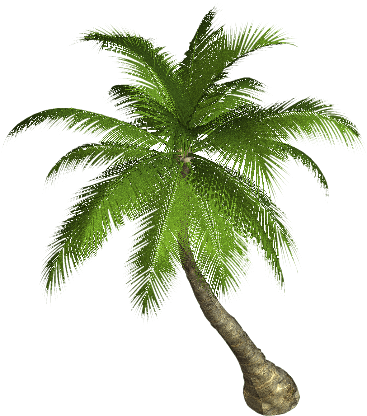 palm tree transparent png stickpng #11009