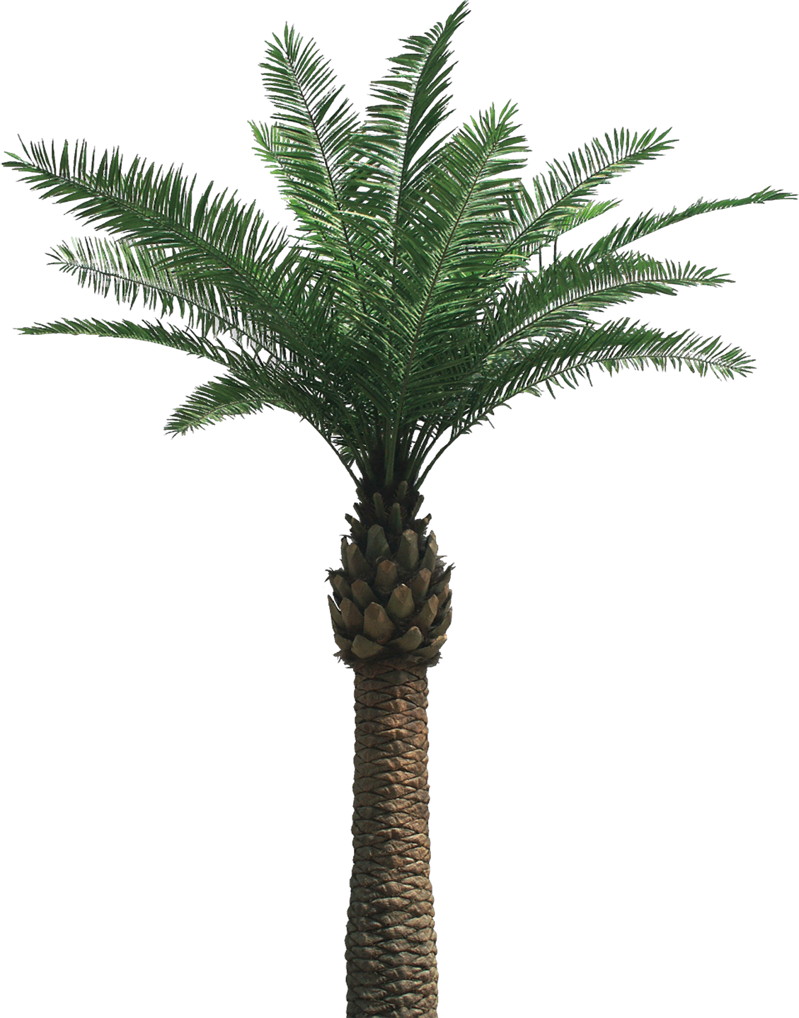 transparent png background palm tree #11030