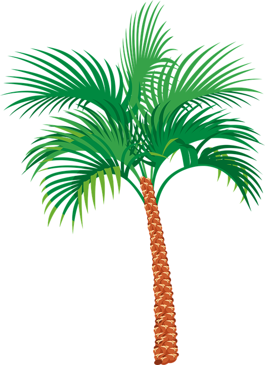 vector graphic palm tree exotic vacation #11007