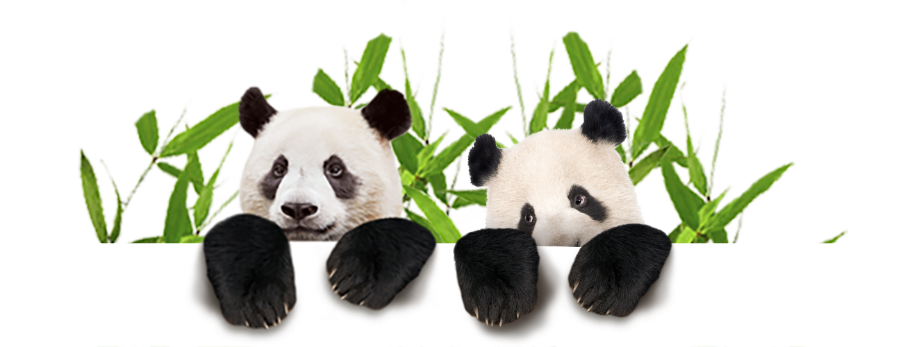 download panda animal png transparent images images #19883