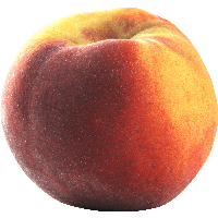 download peach png photo images and clipart pngimg #34589