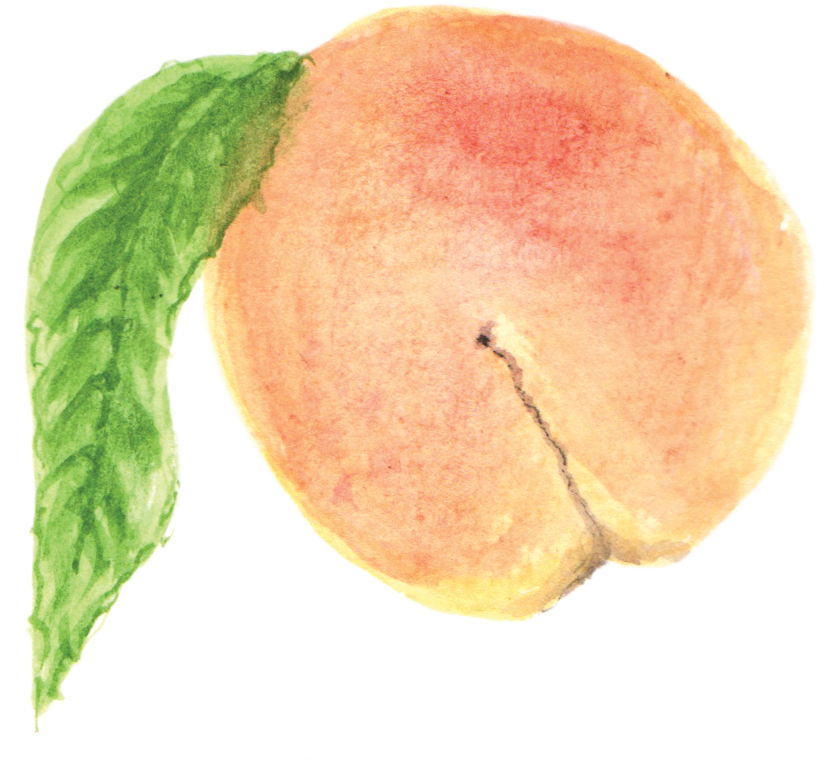 file peach wikimedia commons #34596