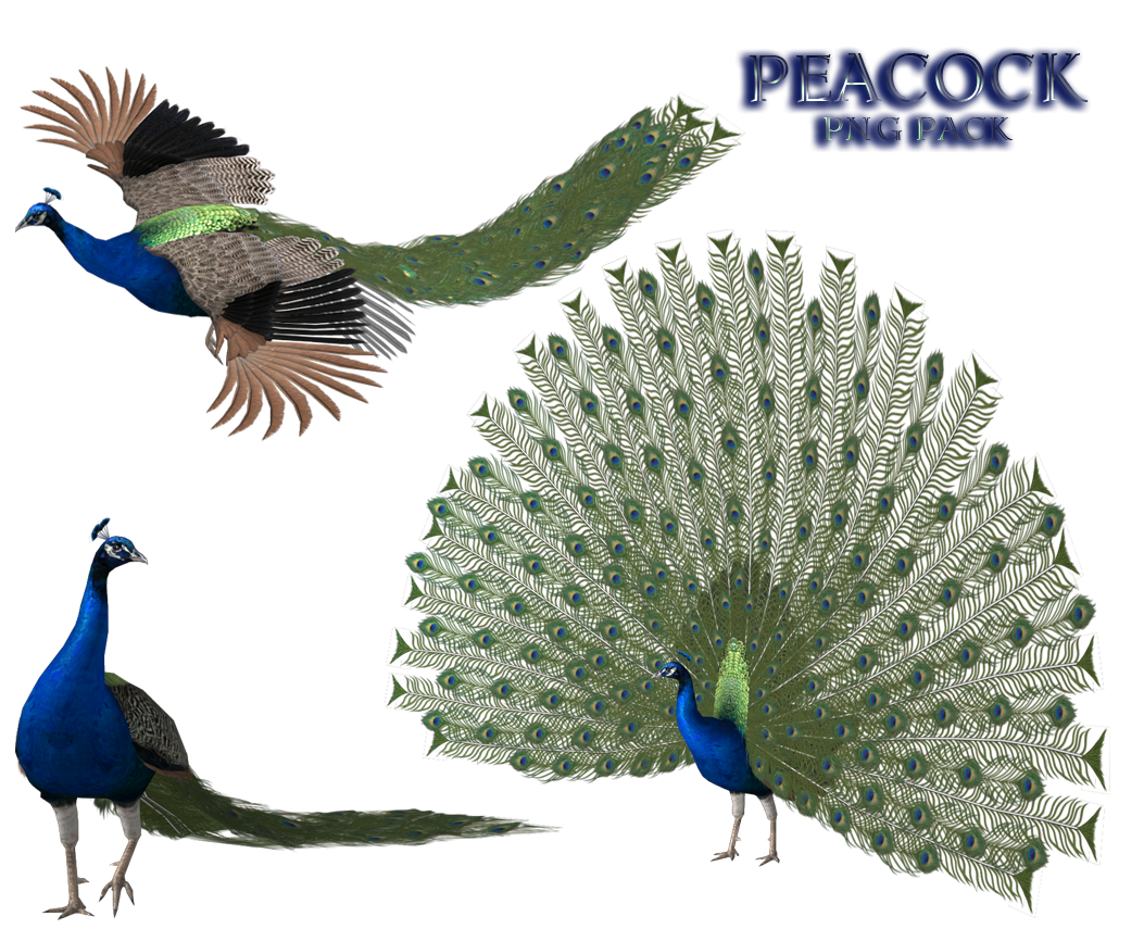 peacock and wings png transparent images images #20763