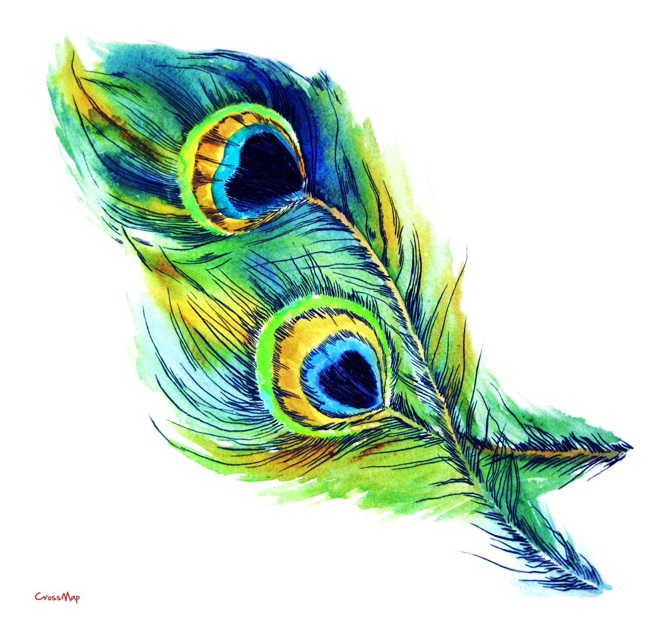 peacock, mor pankh clipart png collection