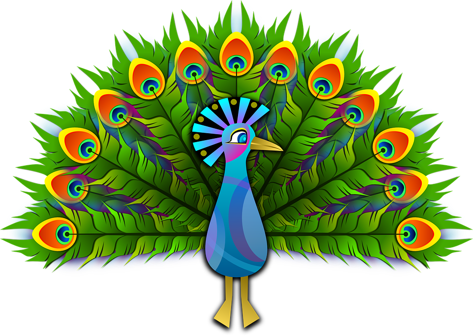 peacock peafowl peachick vector graphic pixabay #20826