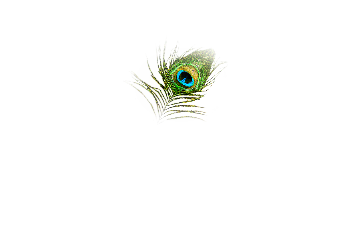 peacock transparent png pictures icons and png 20872