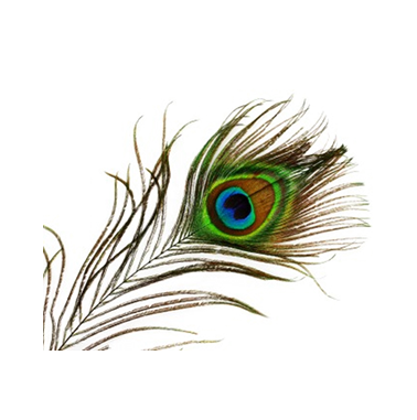 transparent peacock png icons and png #20824