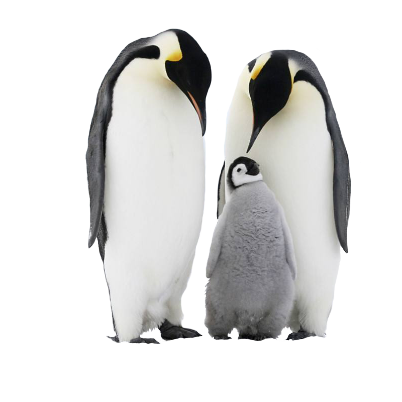 penguin birds png transparent backgrounds images png arts #35638