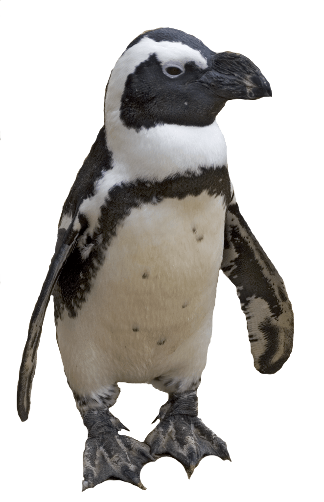 small penguin transparent png stickpng #35555