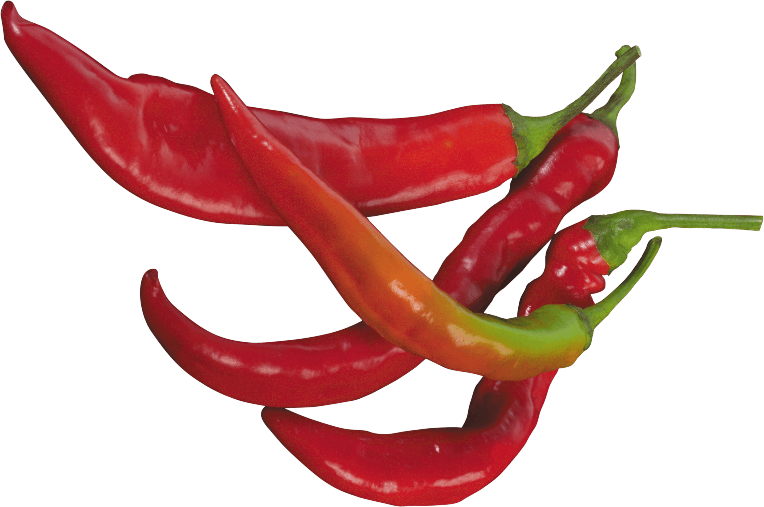red chilli pepper transparent png stickpng #22964