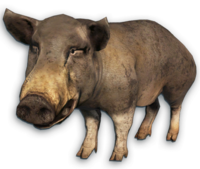 image cutout pig far cry wiki #23464