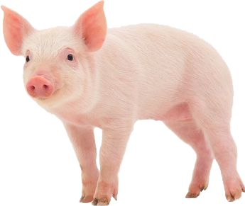 pig png transparent images png only #23472