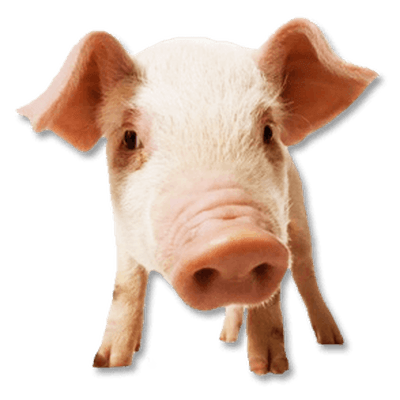 small pig sitting transparent png stickpng #23473