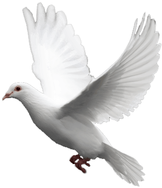 download white flying pigeon png image png image #17875