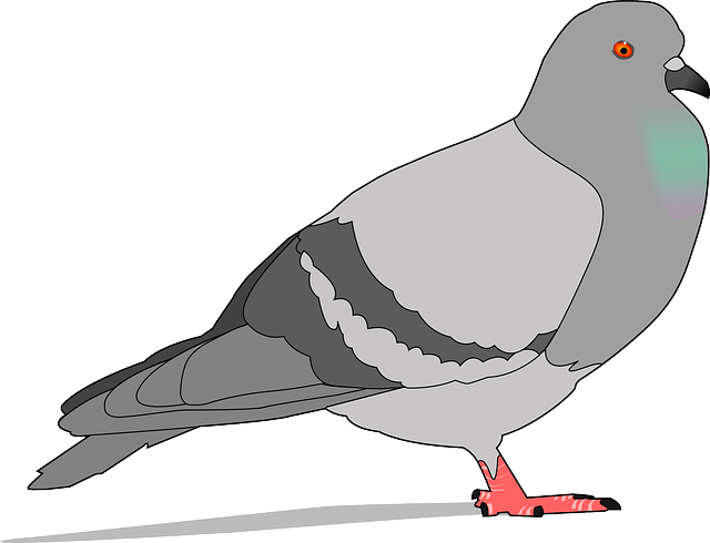 pigeon rock gray vector graphic pixabay #17932