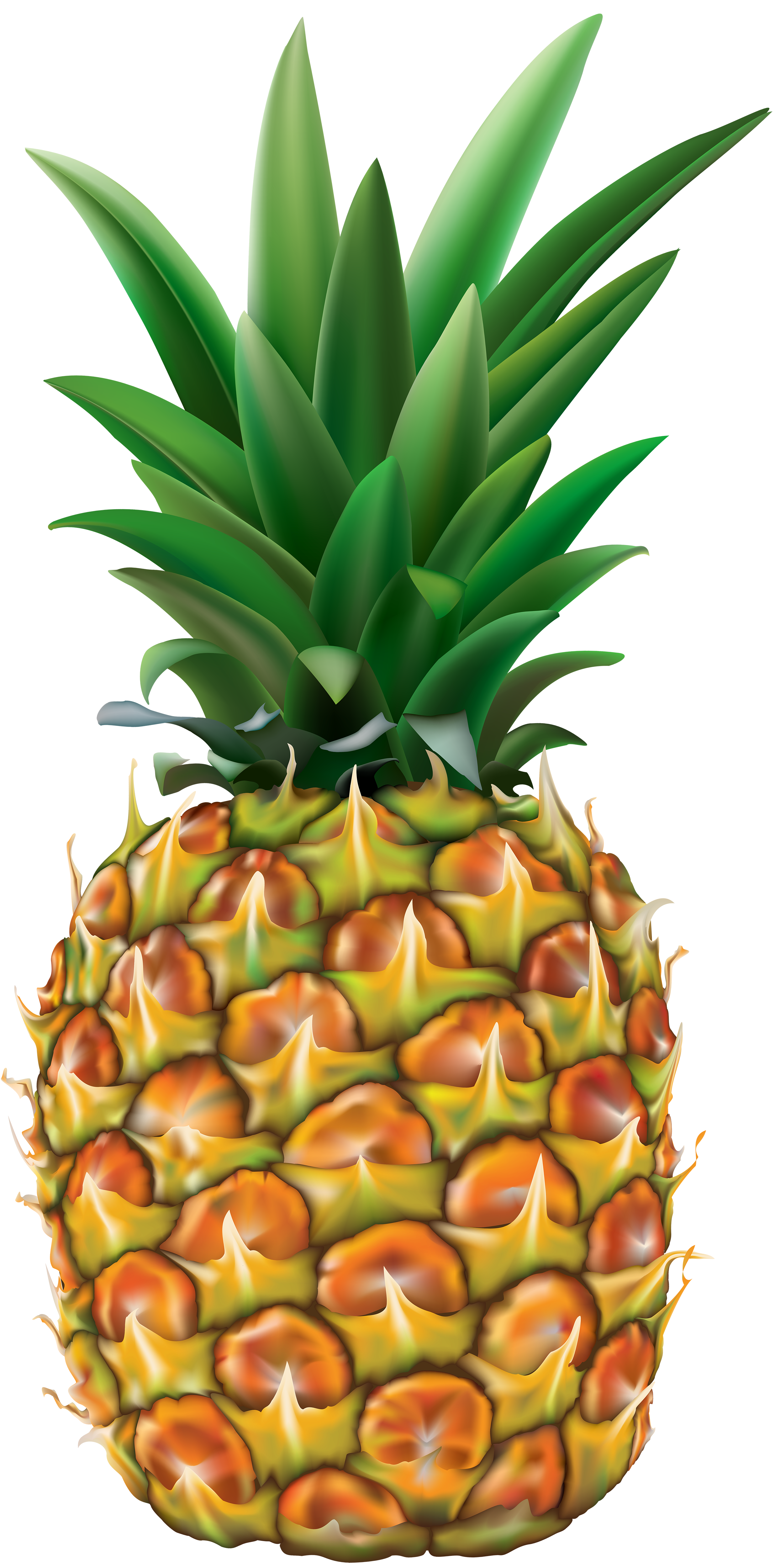 pineapple clipart transparent background pencil and #18456
