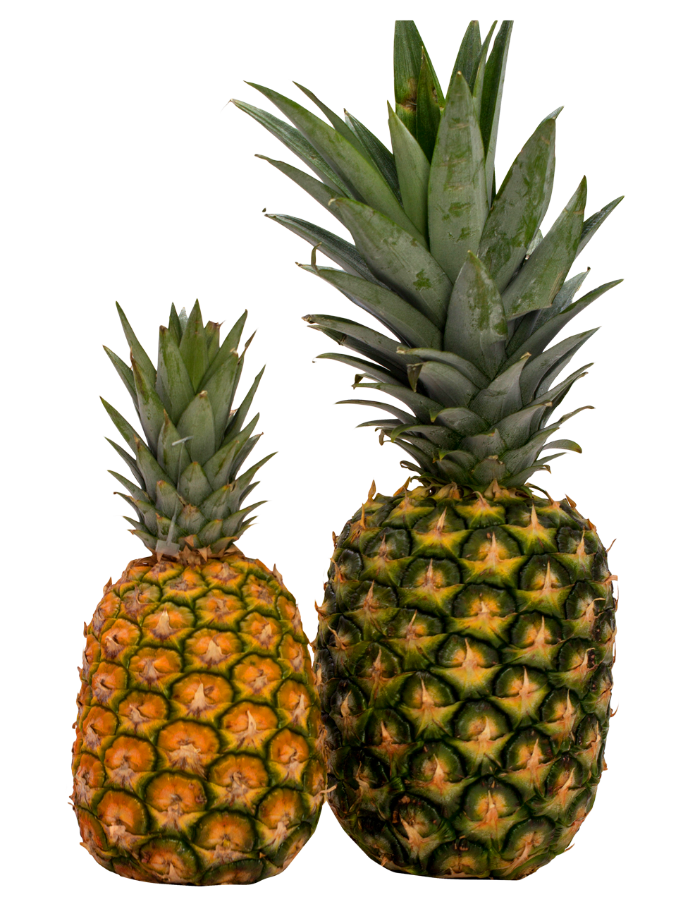 pineapple png image pngpix #18385
