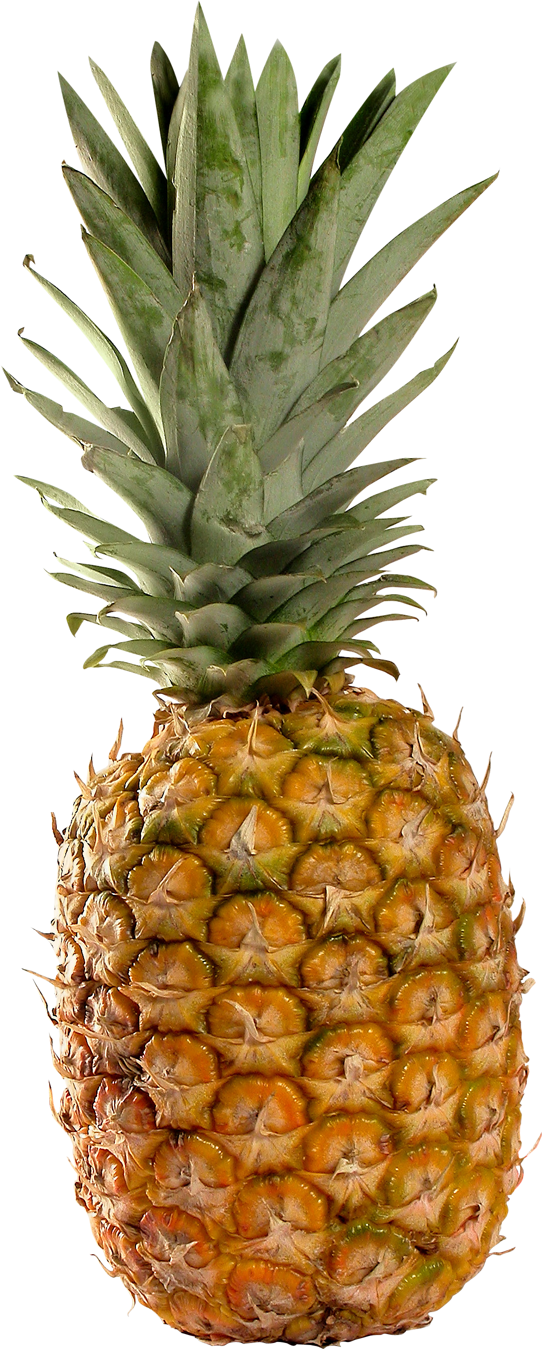 pineapple png transparent pineapple images #18425