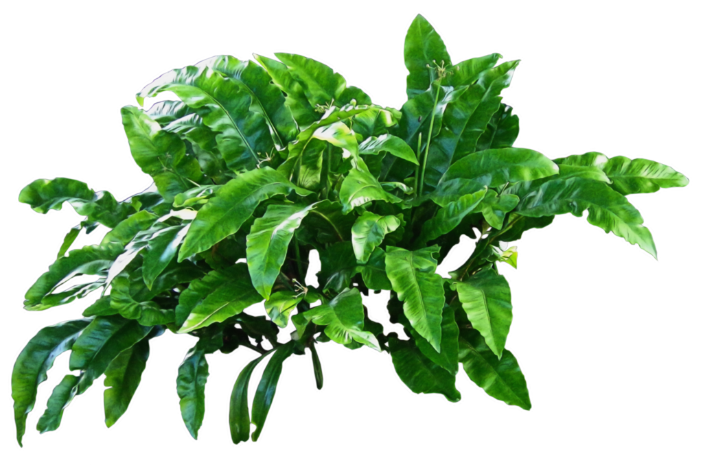 flower plant png #9491
