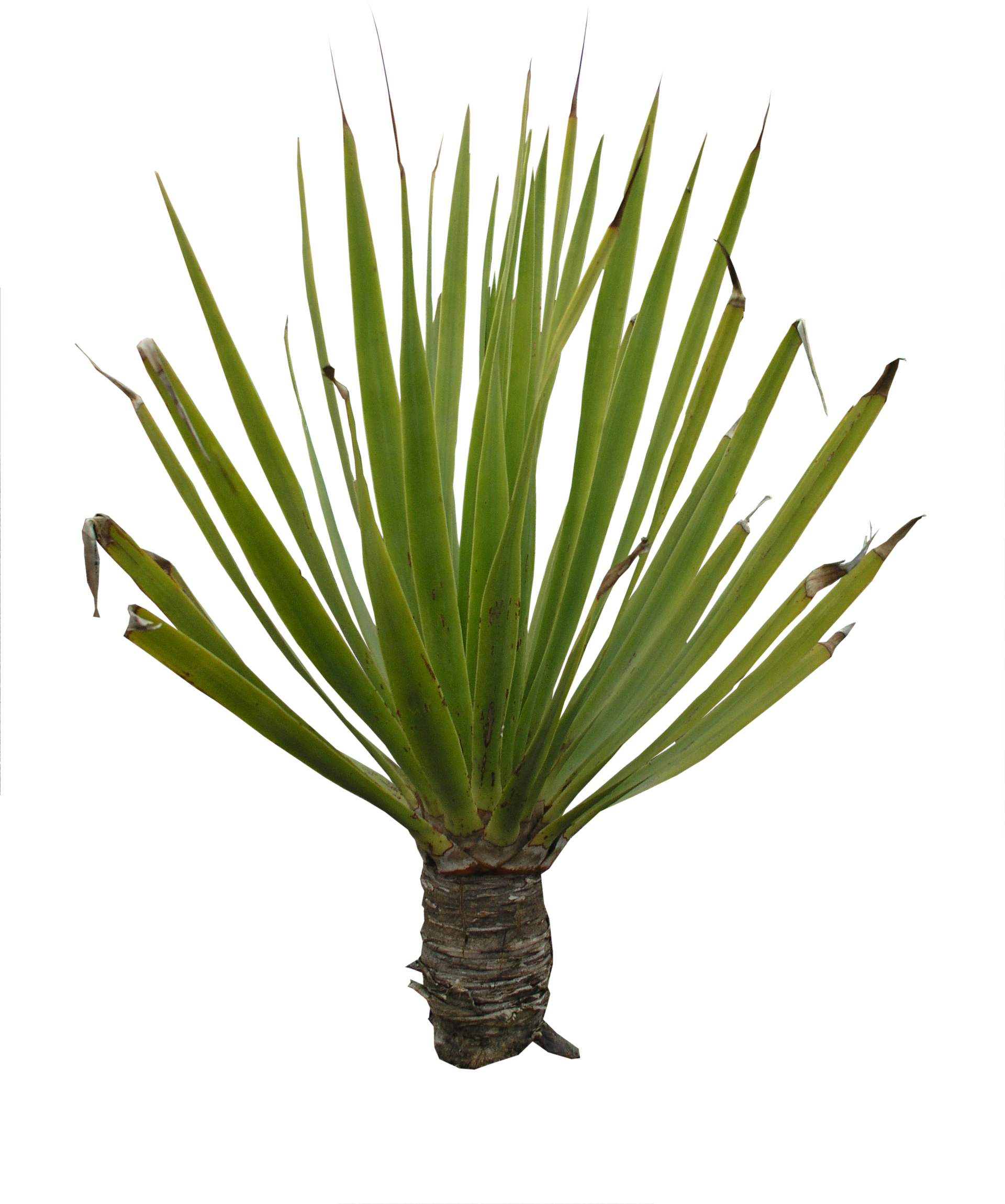 high qualityflora png textures plant png high quality #9479