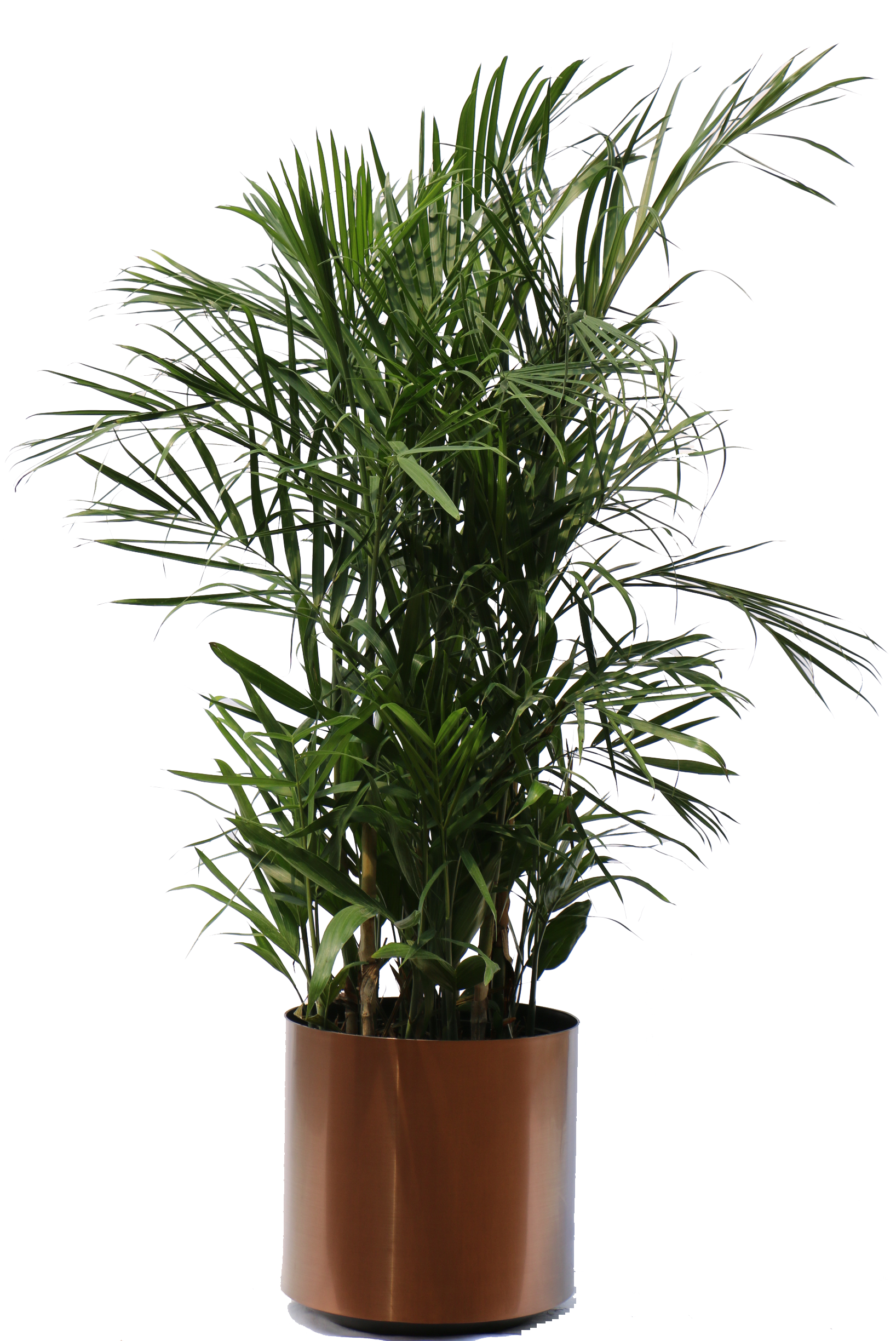house plant png #9509