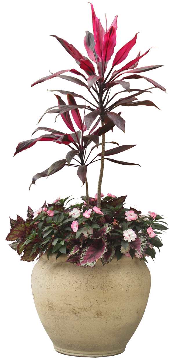 office plant png #9516