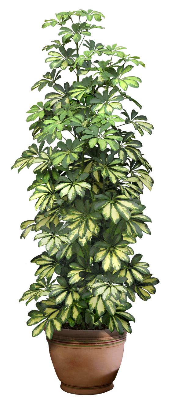 plant png digitalwideresource deviantart #9474