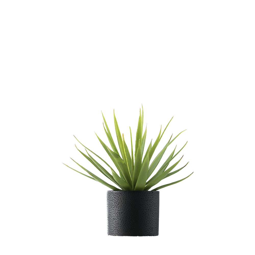 plant png levitating levitate everything #9476