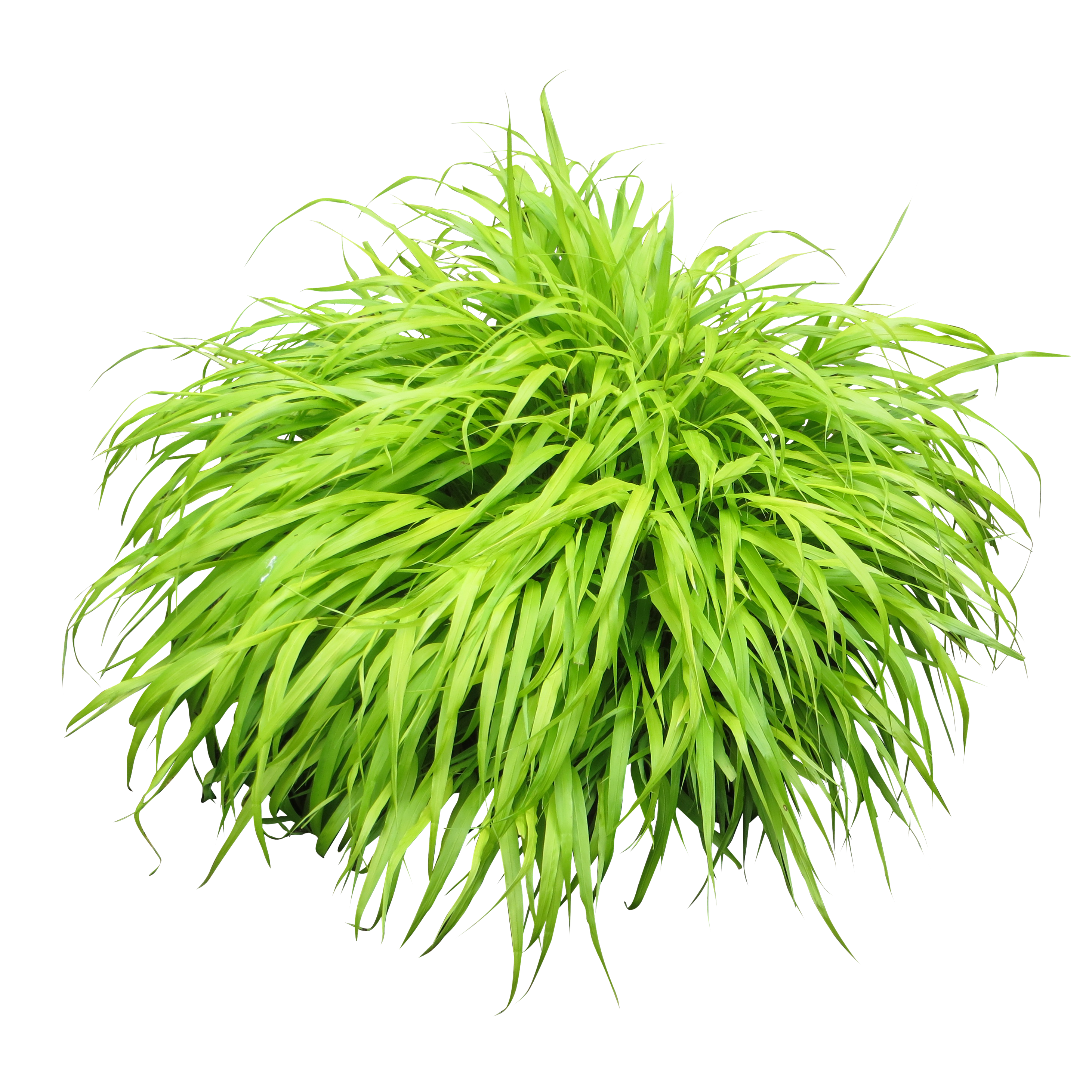 plant png plants png transparent images png only #9483